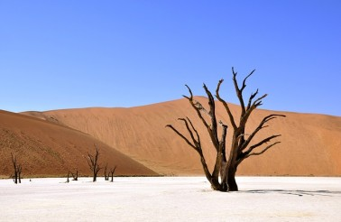 tree-64310_640